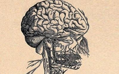 Bloudivý nerv pravděpodobně přenáší serotonin po ose střevo-mozek