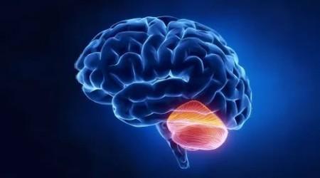 Malý mozek a imunitní systém